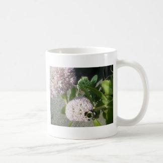 abeja del cardo del milkweed tazas