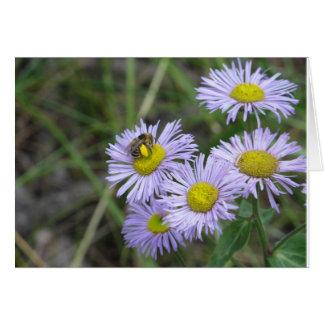Abeja en aster púrpura tarjeta de felicitación