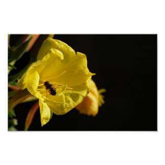 Abeja en la flor amarilla póster