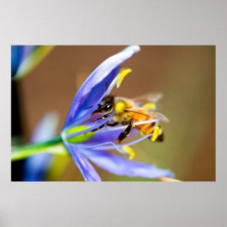 Abeja en la flor azul póster
