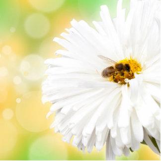 Abeja en la flor blanca adorno fotoescultura