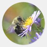 Abeja en la foto de la flor del aster etiquetas redondas