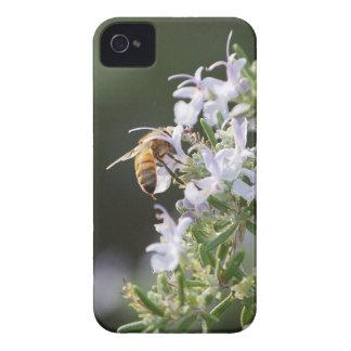 Abeja en la planta de Rosemary Funda Para iPhone 4 De Case-Mate
