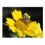 Abeja en la postal amarilla de la flor
