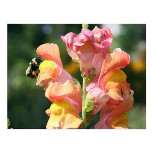 Abeja en la postal de la foto de la flor de Snapdr