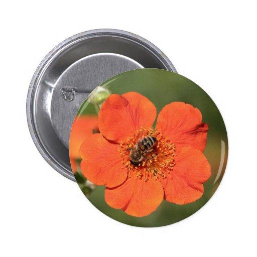 Abeja en Potentilla anaranjado Pin Redondo De 2 Pulgadas