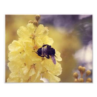 Abeja en una flor amarilla fotografía
