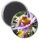Abeja en una flor púrpura iman para frigorífico