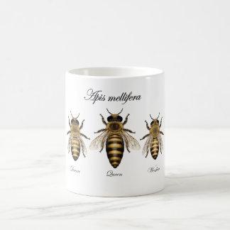 Abeja europea de la miel (mellifera de los Apis) Taza Básica Blanca