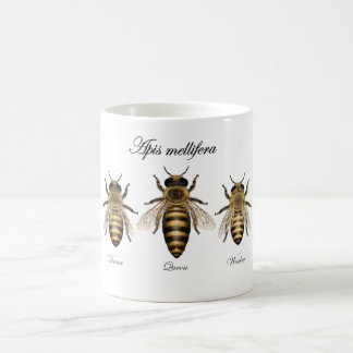 Abeja europea de la miel (mellifera de los Apis) Taza Clásica