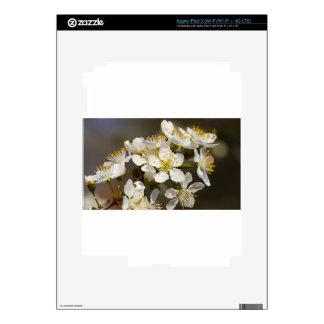 Abeja-flor hermosa pegatina skin para iPad 3
