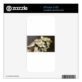 Abeja-flor hermosa skin para el iPhone 4