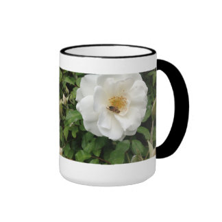 Abeja hermosa en fotografía color de rosa de la taza a dos colores