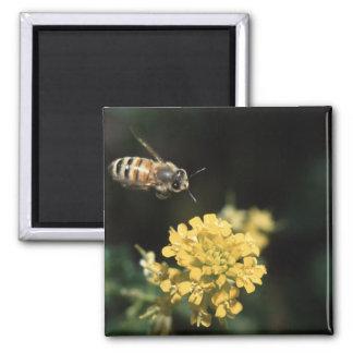 abeja imán