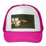 Abeja - miel soy hogar gorras de camionero