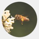 Abeja - miel soy hogar pegatina redonda