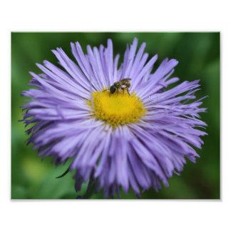 Abeja minúscula en la naturaleza púrpura de la flo cojinete