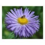 Abeja minúscula en la naturaleza púrpura de la flo fotografias