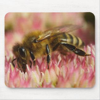 Abeja occidental de la miel tapetes de ratones