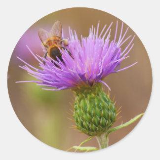 Abeja ocupada en la foto púrpura del cardo pegatina redonda