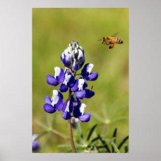Abeja ocupada que comtempla una flor salvaje del póster