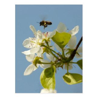 abeja ocupada postal
