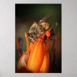 Abeja que recoge el polen posters