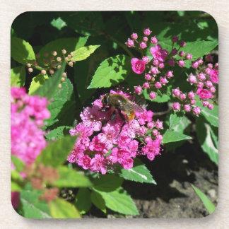 Abeja que recolecta el polen posavasos
