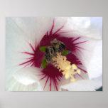 Abeja que recolecta el polen posters