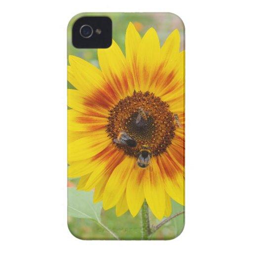 Abeja que trae el néctar de la flor del girasol Case-Mate iPhone 4 protectores