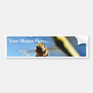 Abeja que zumba alrededor del árbol de limón en mi etiqueta de parachoque