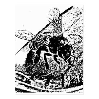 abeja sorbiendo miel postcard