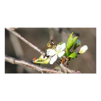 Abeja y flor del manzano - Tarjetas de la foto Tarjetas Con Fotos Personalizadas
