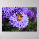 Abeja y paisaje púrpura de la flor posters