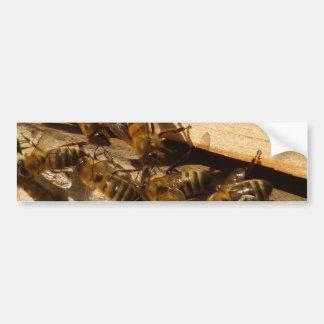 Abejas de la miel pegatina de parachoque