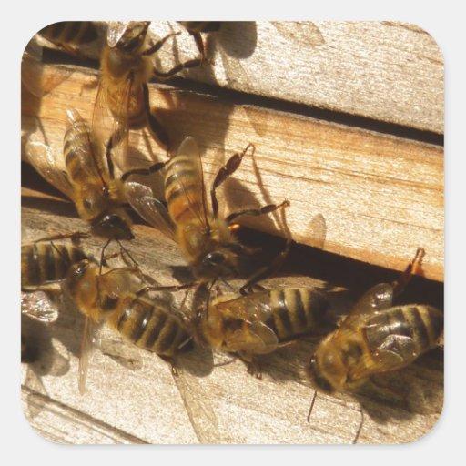 Abejas de la miel calcomanía cuadrada