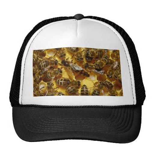 Abejas de la miel en colmena con la reina en centr gorro de camionero