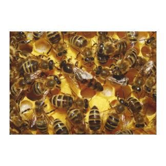 Abejas de la miel en colmena con la reina en centr impresion de lienzo