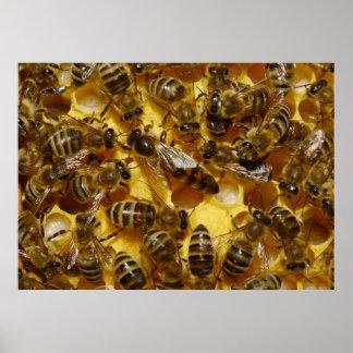 Abejas de la miel en colmena con la reina en centr póster