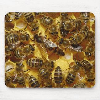 Abejas de la miel en colmena con la reina en centr alfombrilla de ratones