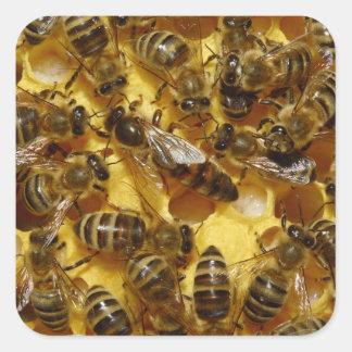 Abejas de la miel en colmena con la reina en pegatina cuadrada