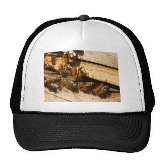 Abejas de la miel gorros