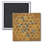Abejas de la miel imanes de nevera