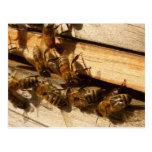 Abejas de la miel postal