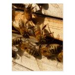 Abejas de la miel postales