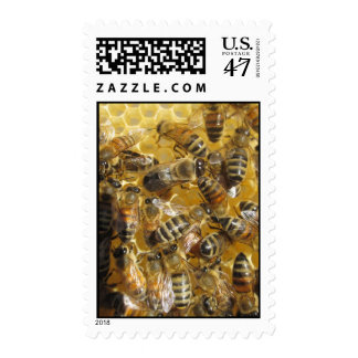 Abejas del pedido por correo sello postal