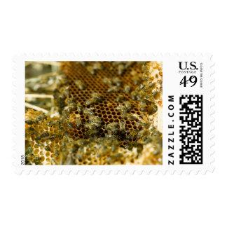 Abejas en la colmena, Western Cape, Suráfrica Sellos