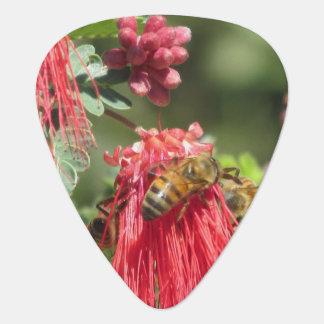 Abejas en la flor rosada plectro