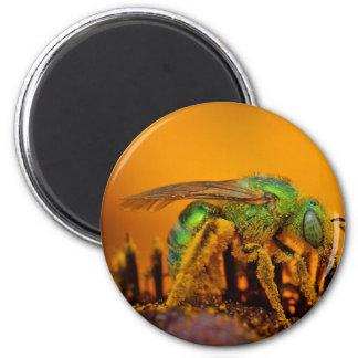Abejas iridiscentes del sudor del verde iman para frigorífico