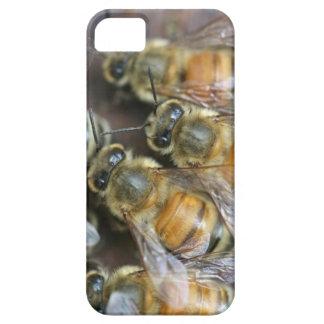 Abejas ocupadas de la miel funda para iPhone SE/5/5s